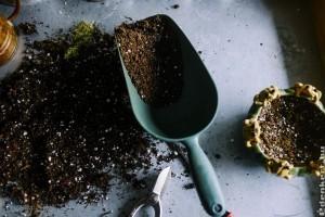 Szobanövények szaporítása - dugványozás