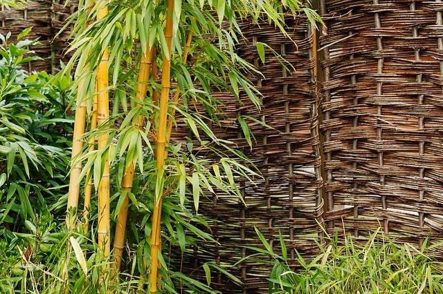 bambusz_soveny