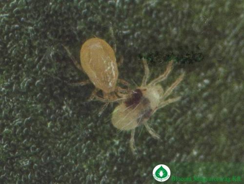 takacsatkat-zsakmanyolo-ragadozoatka