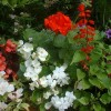 Virágzó Zugló 2011 - Fogarasi út 27/a,b
