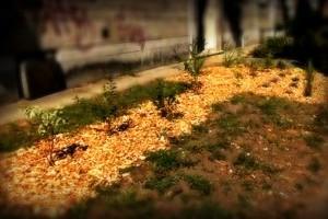 Virágzó Zugló 2011 - Örs vezér tere 4-6