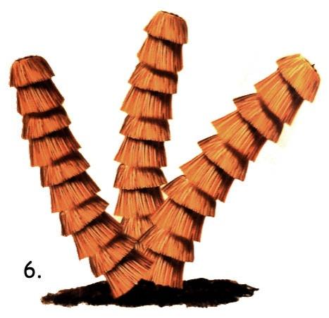 6-lepes