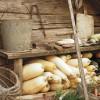 Hogyan tároljuk télen a zöldségeket?