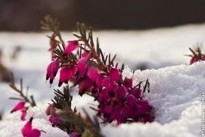 Hidegben is virító növények