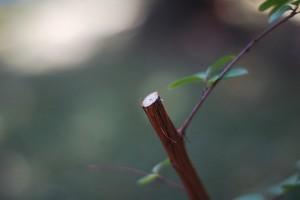 Útmutató a szobanövények metszéséhez