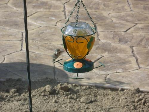 madareteto-kolibri