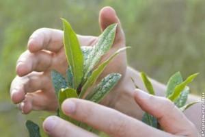 Haszonnövényeink védelme
