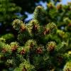 Örökzöld növények gondozása