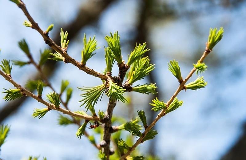 vorosfenyo_tavasszal