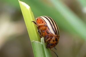 Biológiai védekezés az állati kártevők ellen