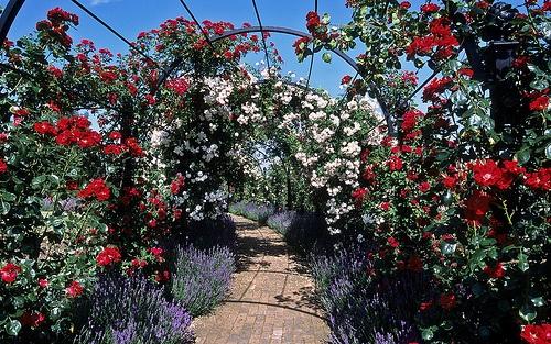 rozsa-alagut