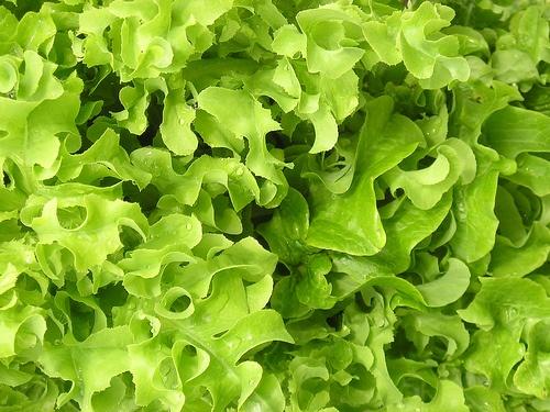 metelesalata-salad-bowl