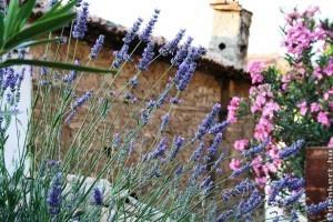 Mediterrán illatok hordozói