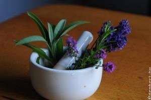 Illatos növények a lakásban vagy autókban