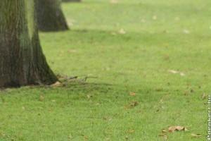 Mohátlanítás fák metszésével?