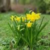 Praktikus kerti tanácsok márciusra