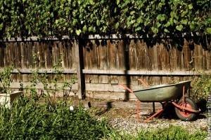 Hogyan kezdjük az elhanyagolt kertünk rendbetételét?