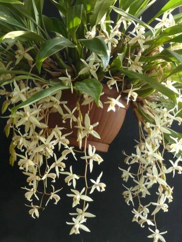 15-orchidea-kiallitas