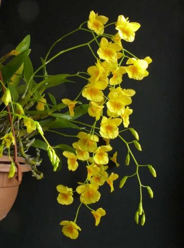 orchidea-kiallitas