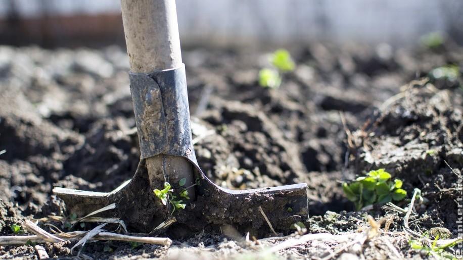 Áprilisi teendők: munkadömping a kertben!