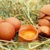 Nagyító alatt a tojás
