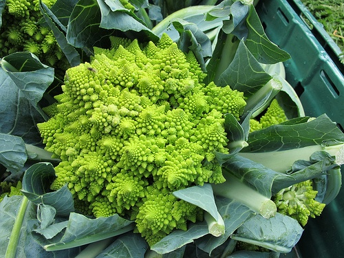 romanesco-karfiol