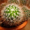 Kaktusz és pozsgásnövény kiállítás és vásár 2012