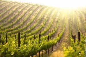A szőlő biológiai növényvédelme