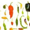 Paprika (Capsicum) minden mennyiségben