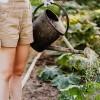 Júniusi kerti teendőink listája