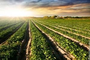 Szabadföldi növénytermesztés
