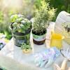 Miért betegednek le a frissen vásárolt fűszernövények röviddel ültetés után?