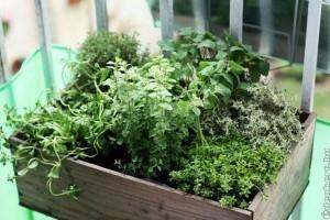 Mini csemege-erkély: fűszernövények, gyümölcsök a teraszról
