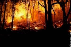 Kánikulában az erdőtűznek is nagyobb a veszélye