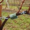 Ragadozóatkák a szőlő védelmében