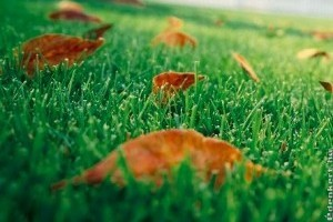 A kert őszi tápanyagai