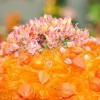 Hortus Hungaricus, az ősz legnagyobb kertészeti szakkiállítása és vására