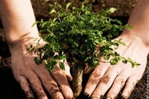Milyen távolságra szabad a fákat és bokrokat a telekhatártól telepíteni?