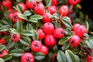 Az ősz díszei: tarka lombok, színes bogyók