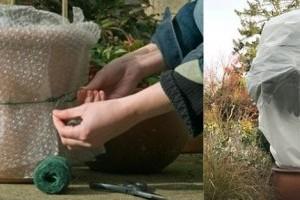 Téliesített balkonnövények, avagy dézsások teleltetése