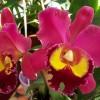 A Budavári Kertészetnek állít emléket az őszi Orchidea és Bromélia Kiállítás