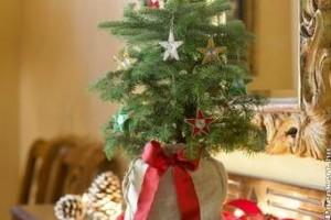 Ajándékozz ÉLETET a karácsonyfának!