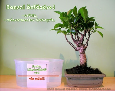 bonsai_ntzse_1