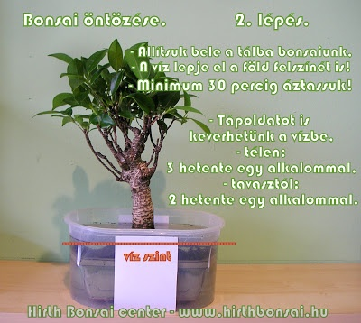bonsai_ntzse_2