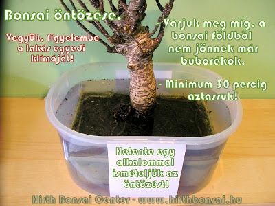 bonsai_ntzse_3
