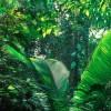 Az Amazonas esőerdői még mindig érzik a 2005-ös szárazság hatásait