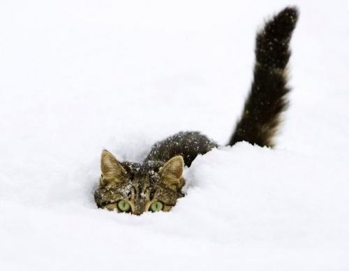 macska_jatszik_a_hoban14