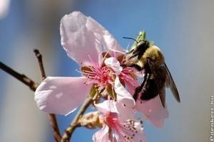 A méhekre veszélyt jelentő vegyszerek korlátozását kéri a Greenpeace