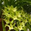 Indonézia csodálatos orchideái