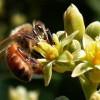 A méhek nem bírták a sok munkát: kevesebb lesz a gyümölcs idén